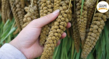 Millets the Alkalizing Grain